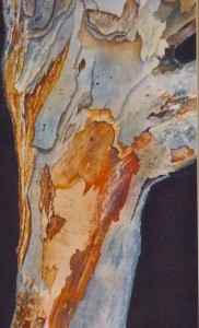 """Eucalyptus Bark"" by Julie McCue   First Place"