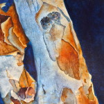 Eucalyptus Bark II   -  watercolor on clapboard by Julie McCue