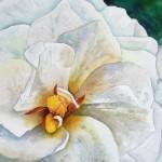 """Gardenia Closeup"" watercolor by Julie McCue"