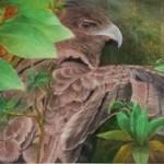 """""""Io - Hawaiian Hawk""""  oil by Norma Watt"""
