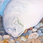 McCue monk seal